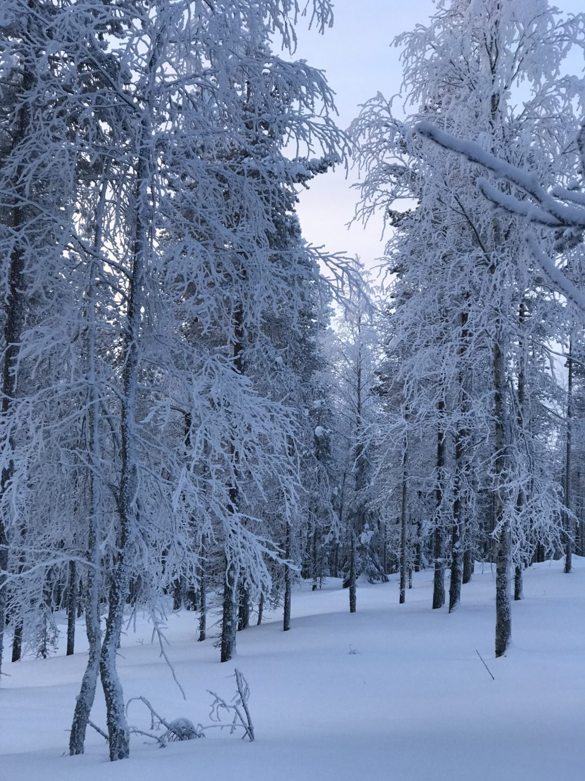 Levi, Finland, snow, holiday, travel, trees, winter, ski